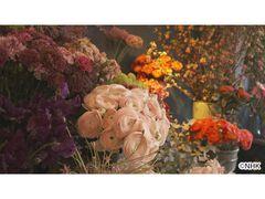 世界はほしいモノにあふれてる 〜旅するバイヤー 極上リスト〜 フランス癒やしの花の世界 最高のブーケを探す旅