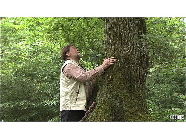 アファンの森よ永遠に〜C.W. ニコルからのメッセージ〜