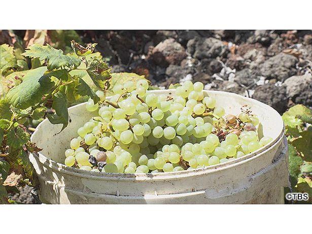 世界遺産「ピコ島のブドウ園の景観 石垣8000km!大西洋の火山島」