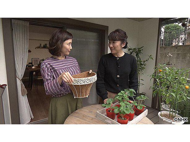 趣味の園芸 やさいの時間 もえのプランター菜園「イチゴを壁掛け栽培」